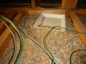 岐阜県大垣市 ネズミ 喫食痕 シード ヒマワリの種 天井裏