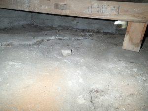 福岡県朝倉市 有害獣・アライグマ 床コンクリートひび割れ